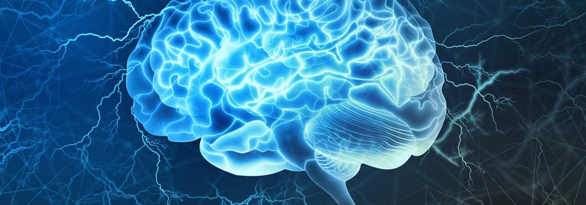 Fonctionnement du cerveau humain